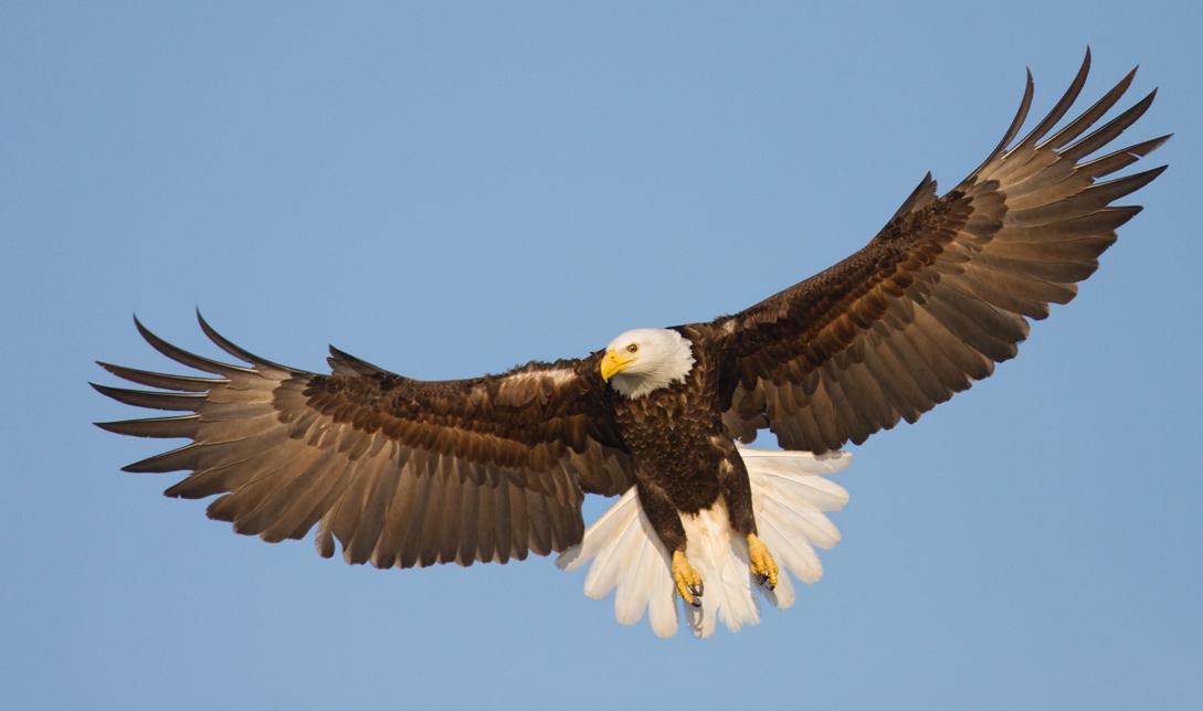 Eagle bird images - photo#14